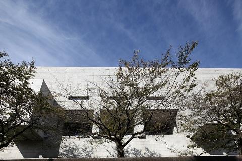 最高裁の桜の写真